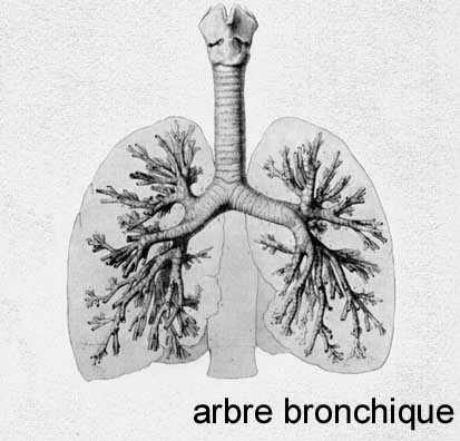 sous crépitants pulmonaires